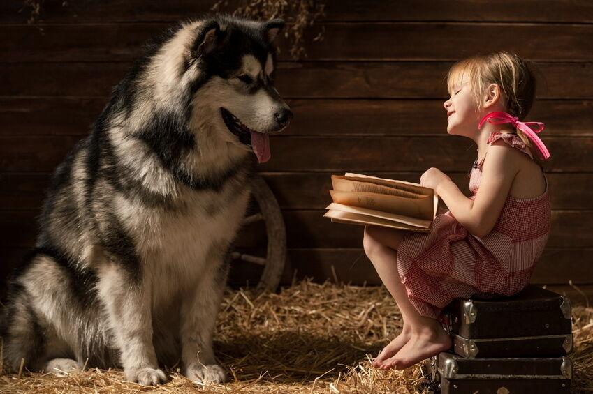 Bei Fuß! Wie Sie den passenden Ratgeber für Ihren Hund finden