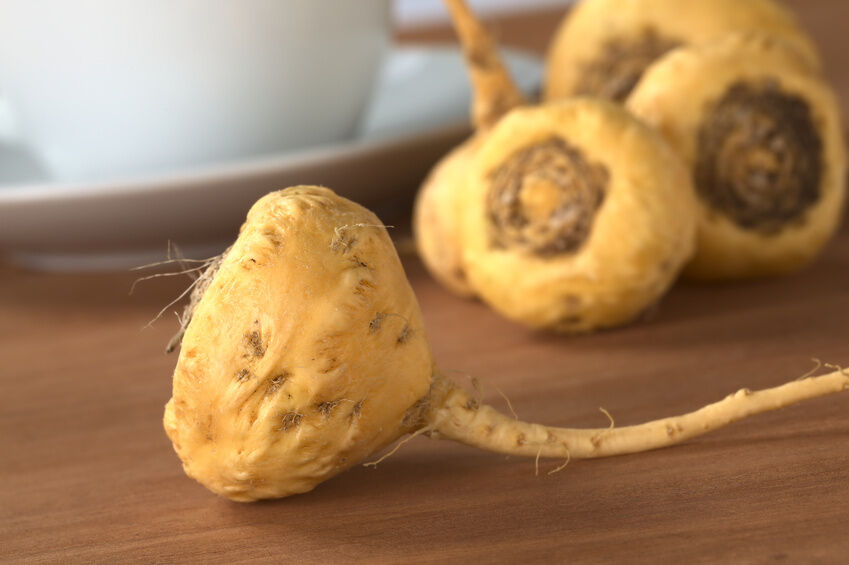 Image result for images of maca root