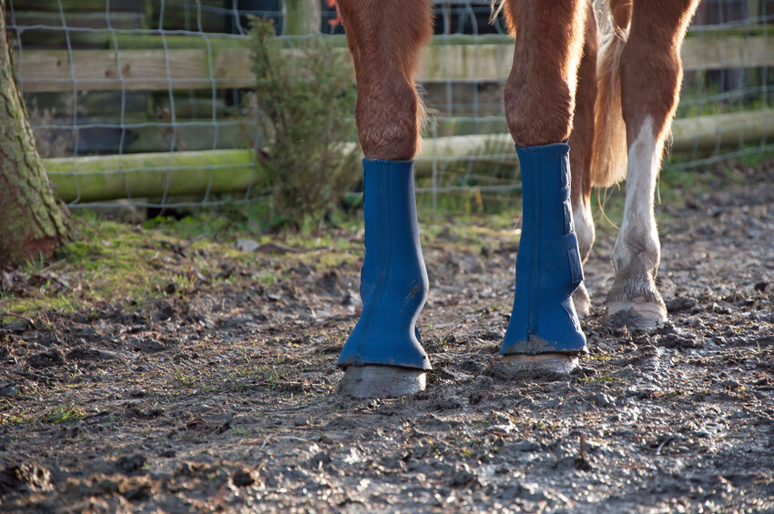 Schützt Beine, Sehnen und Gelenke beim Sprung: Springgamaschen für Pferde