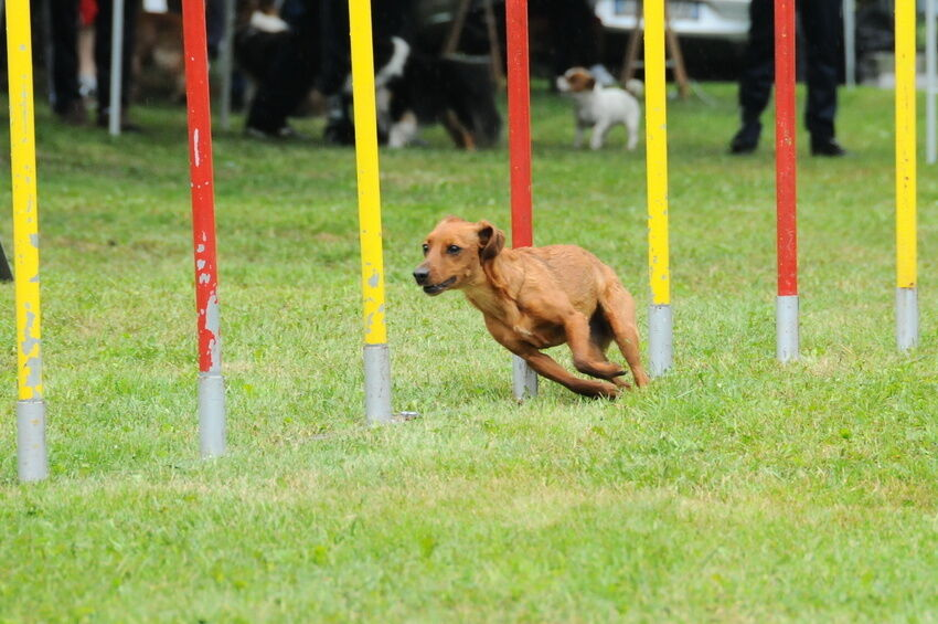How to Use Your Agility Dog Training Equipment