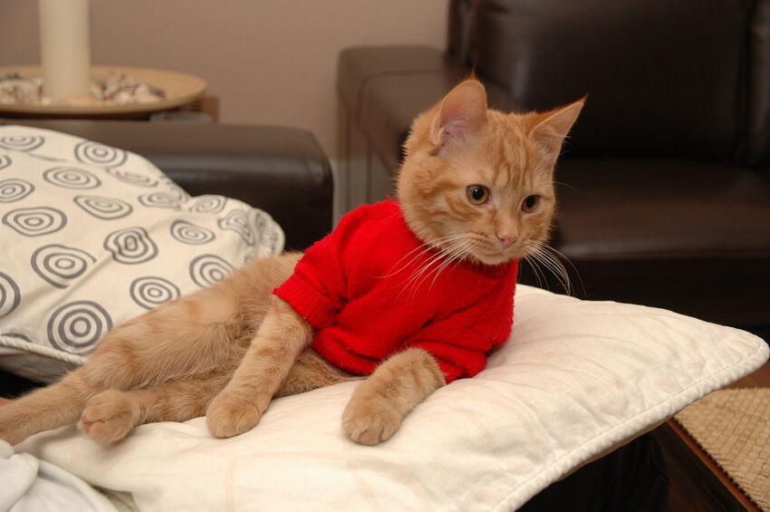 How to knit a cat sweater ebay - Knitted cat sweater pattern ...