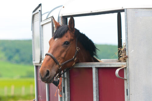 The Complete Guide to Buying a Used Horse Trailer