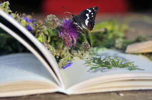 Best Herb Books