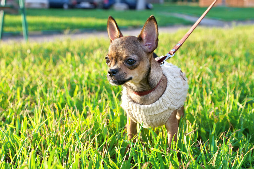 Top 3 Holiday Dog Jumpers