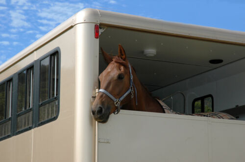 3 Steps to Properly Transporting Your Horse