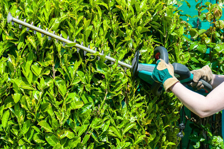 how to choose a hedge trimmer  ebay, Natural flower
