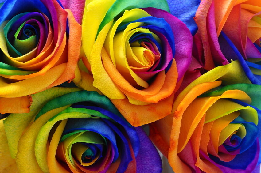 How to make rainbow roses ebay for What are rainbow roses