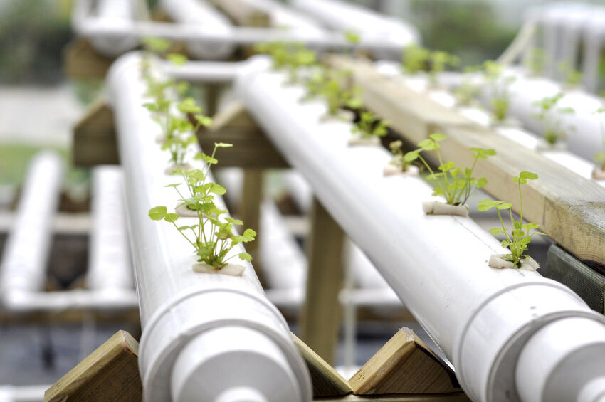 How to Use Ballast in Your Hydroponics System