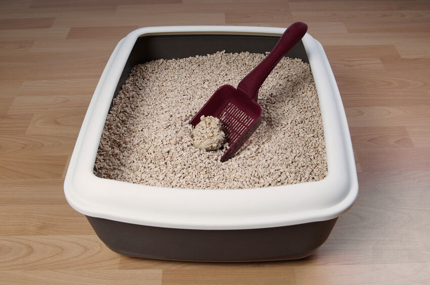 Cat Litter That Is Easy On Paws