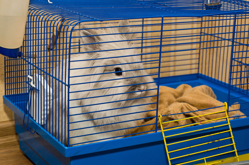 How to Choose the Right Degu Home for a Pet