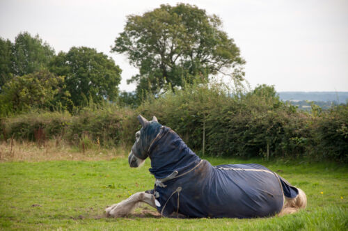 How to Buy a Fabric Horse Rug