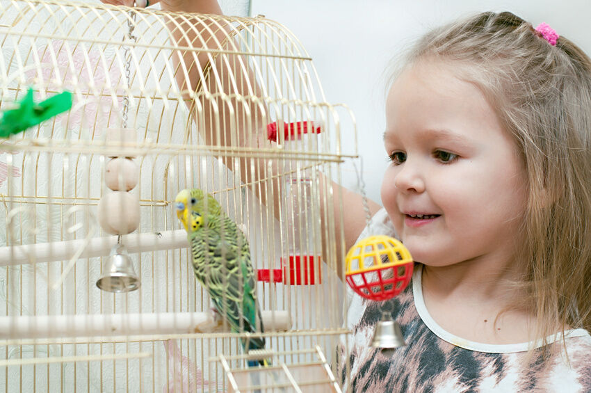 How to Make a Bird Cage Seed Catcher