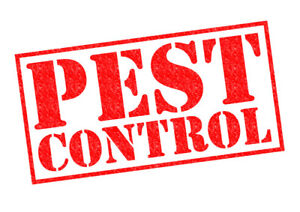 Pest Control -  ✓ Experts ✓ Effective - 647 961 7426