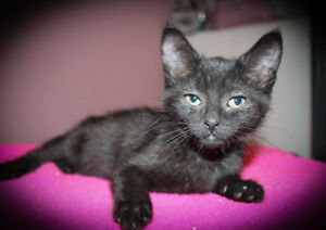 Char - Lee - Anne - now available for adoption