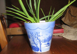COLLECTABLE PLANT POT WITH SPIDER PLANTS IN IT
