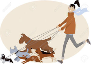 Dog Walker and Dog Care  in New Westminster!