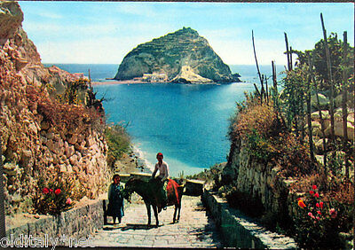 1966 Card Island D'Ischia Sant' Angel Donkey Editions of