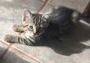 4 FREE KITTENS - READY TO GO July 29th!