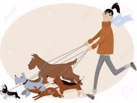 Dag walking grooming and training service