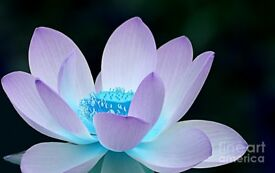 Head to Toe Thai Massage