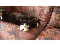 Lovely 9 weeks kitten for sale