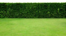 Derby Garden Services - Hedges, Lawns, Trees & Garden Clearances - Domestic & Commercial
