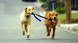 TJ K9 walks - dog walking service in Maldon and surround areas. Friendly and flexible service.