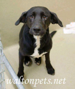 Niagara Dog Rescue - Cosmos is a Nervous Guy