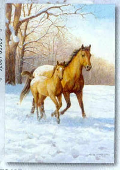 Xmas Cards Appaloosa MARE & FOAL HORSE Holiday Cards 10 per box