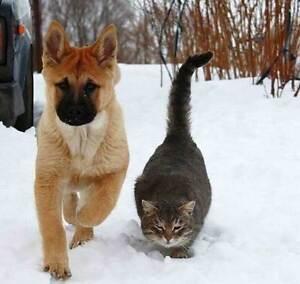 Pet Sitting Plus :)  !!!!! London Ontario image 2
