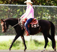 Beautiful 4 Year Old Gelding for Sale!