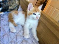 Kittens 9 Weeeks