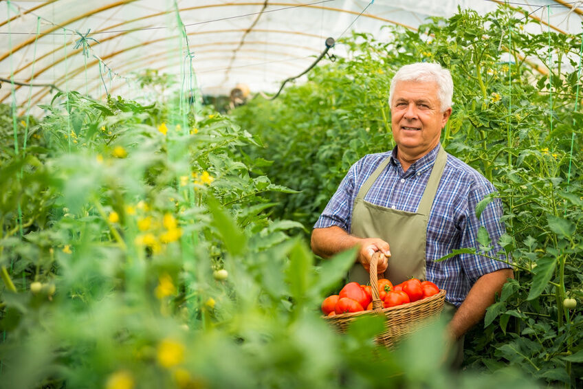 How to Grow a Vegetable Garden in a Greenhouse