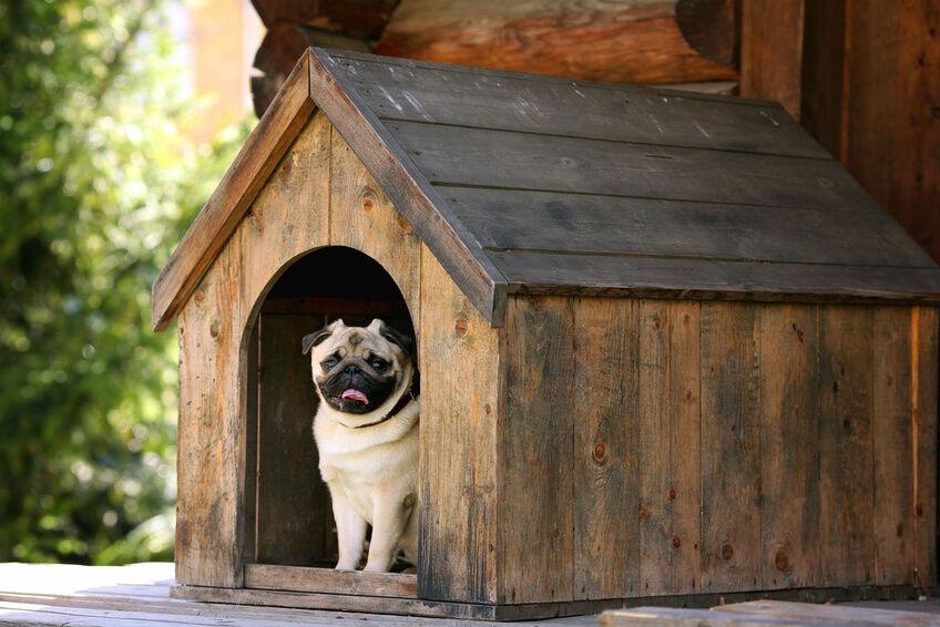 how to build a dog house ebay. Black Bedroom Furniture Sets. Home Design Ideas