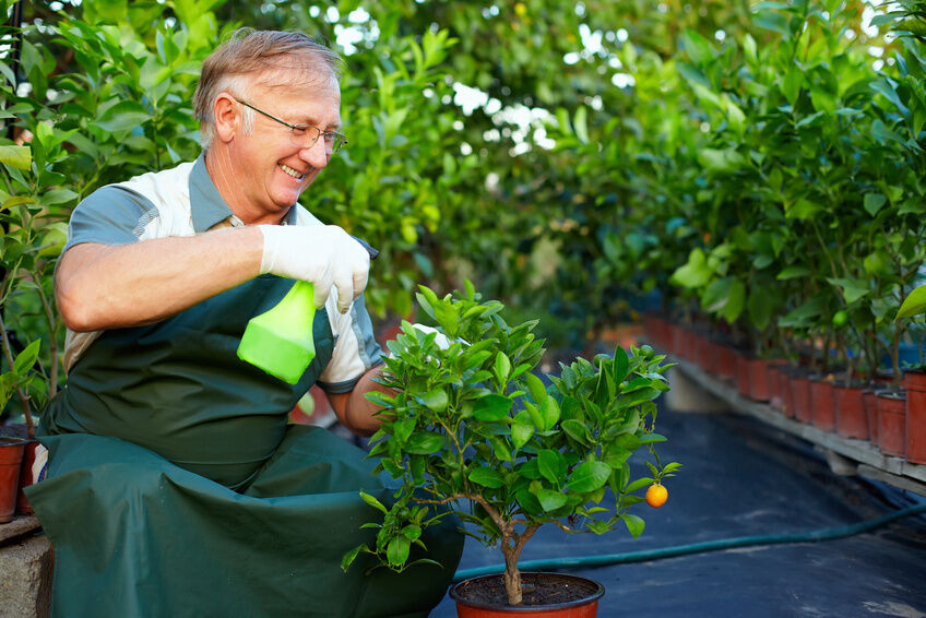 Top 3 Citrus Plants for the Home
