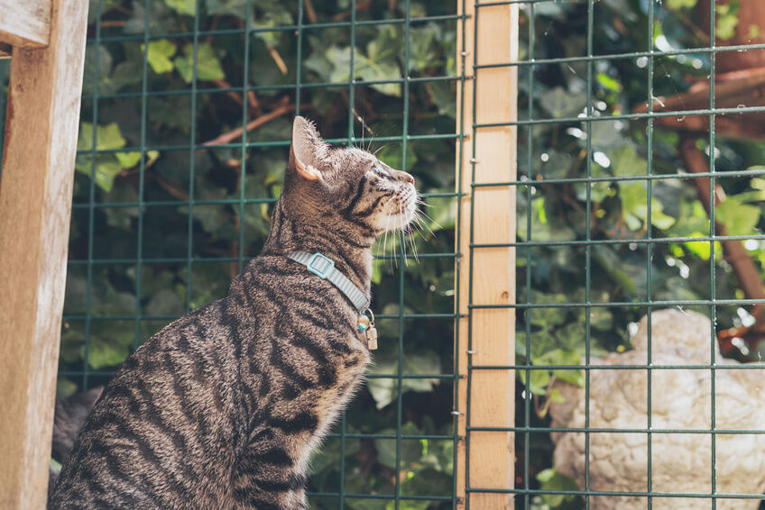 how to build an outdoor cat enclosure
