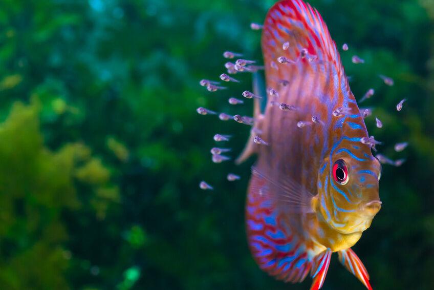 Die richtigen wasser temperaturen f r verschiedene for Kampffische arten