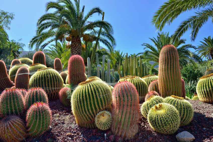 5 Great Reasons to Choose Succulent Plants for Your Garden