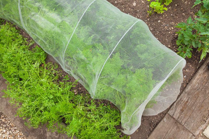 How to Build a Garden Cloche eBay
