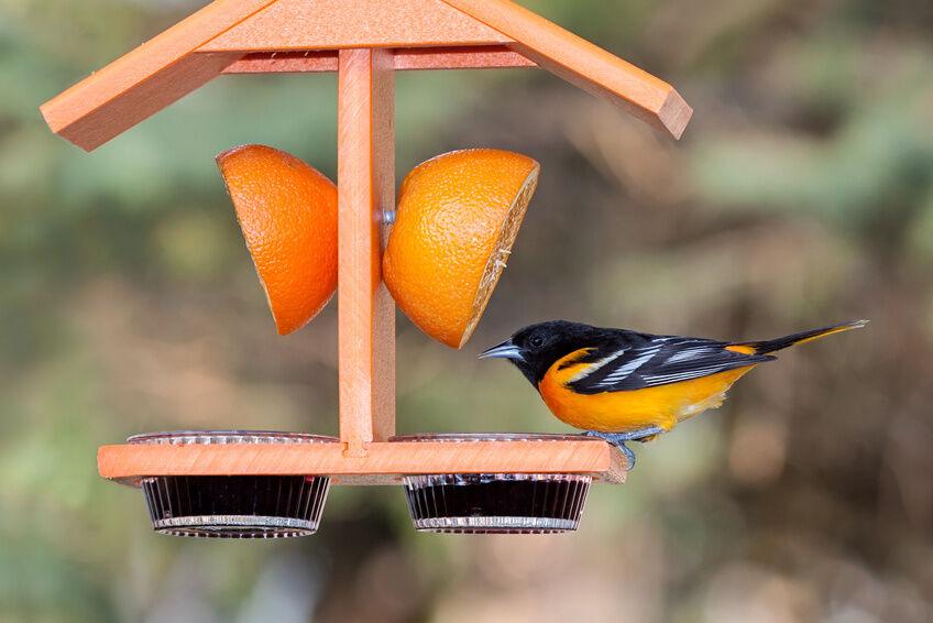 How to Make an Oriole Bird Feeder | eBay