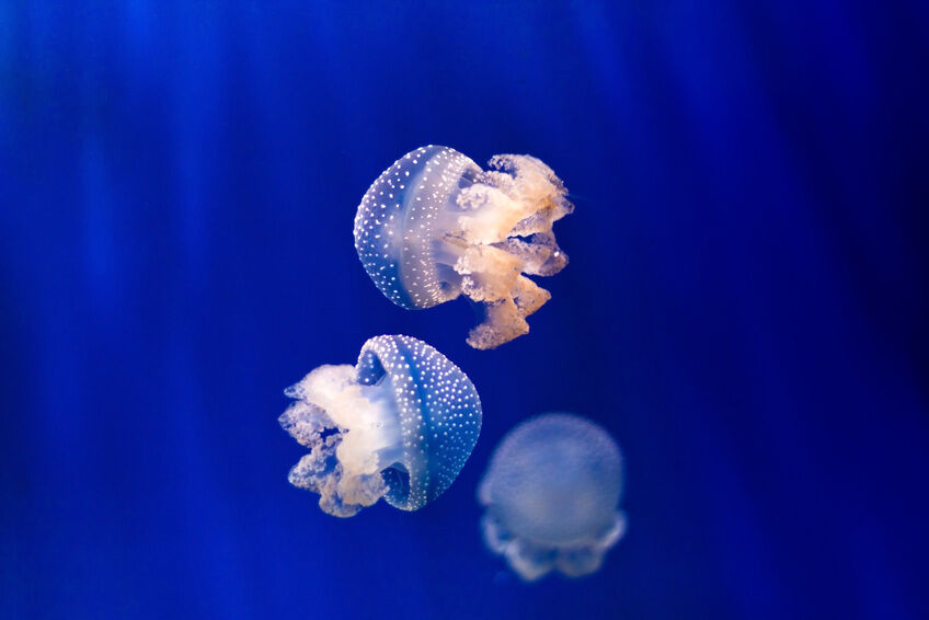 Best Jellyfish Aquariums Ebay