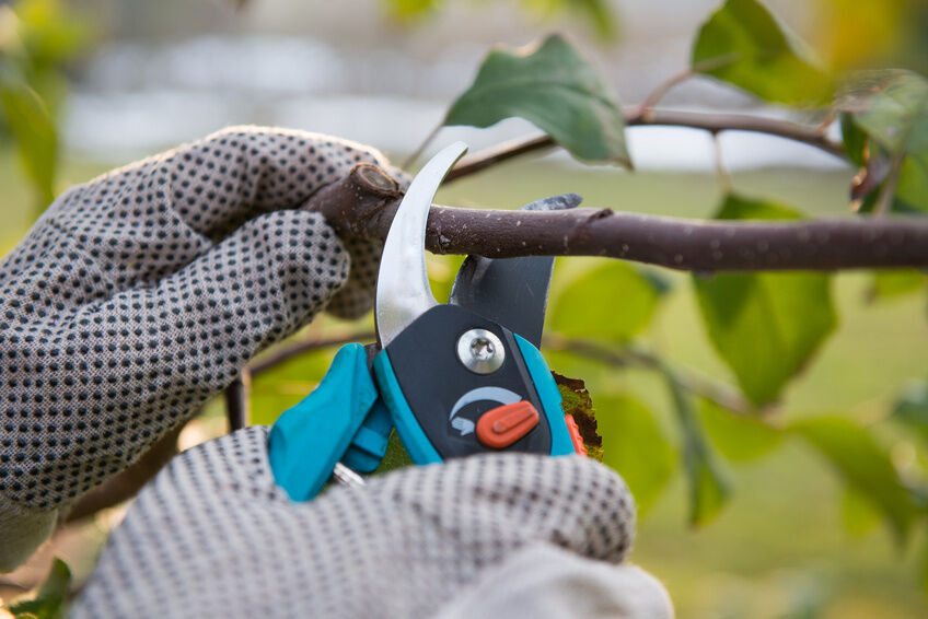 How and When to Prune Plants