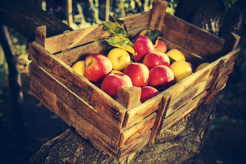 How to make wooden fruit crates ebay for How to make apple crates