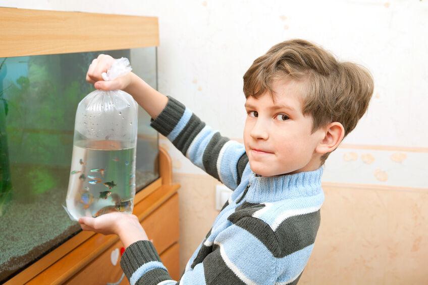 aquarien für die optimale wassertemperatur richtig heizen  ~ Kühlschrank Optimale Temperatur