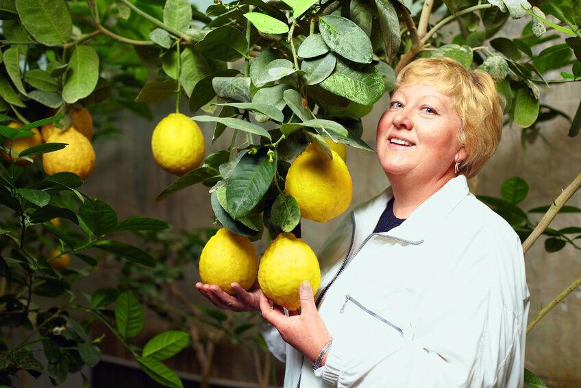 Leckere Verarbeitungsmöglichkeiten für Zitronen aus Eigenanbau