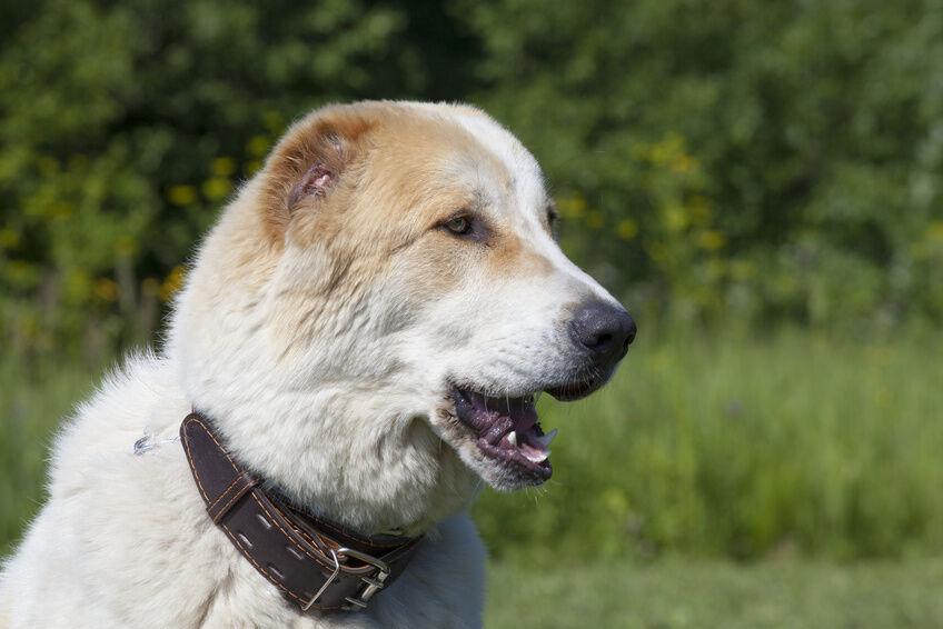 Wie der Hund so sein Halsband So finden Sie das passende Hundehalsband
