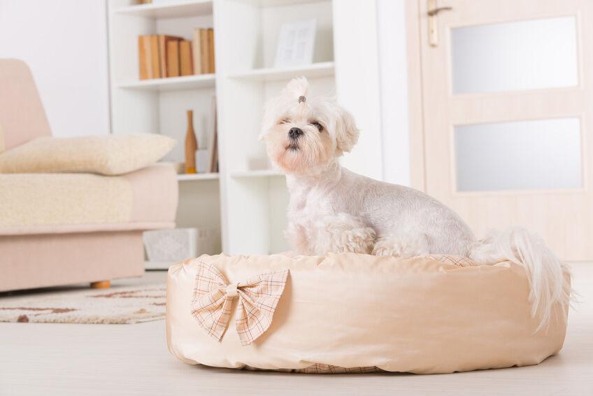 Was ist beim Kauf eines Hundebetts zu beachten?