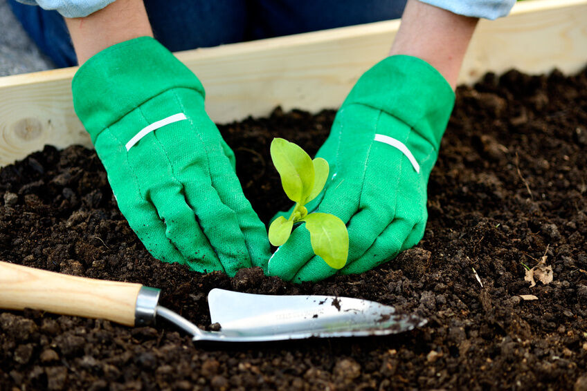 One Of The Biggest Problems Novice Gardeners Have Is The Hazard Their Hands  Face From Using Unfamiliar Tools And Dealing With Plants.