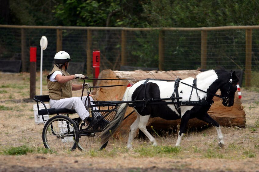 Pony Cart Buying Guide