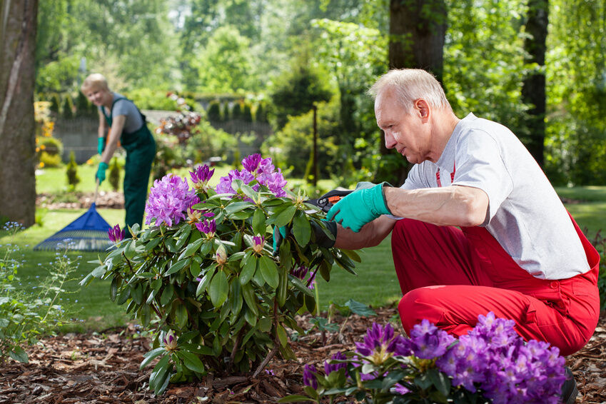 5 Tips for Flower Gardening in Shady Spaces eBay